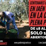 CENTENARES DE TEMPOREROS EN JAÉN DUERMEN EN LA CALLE EN PLENA PANDEMIA